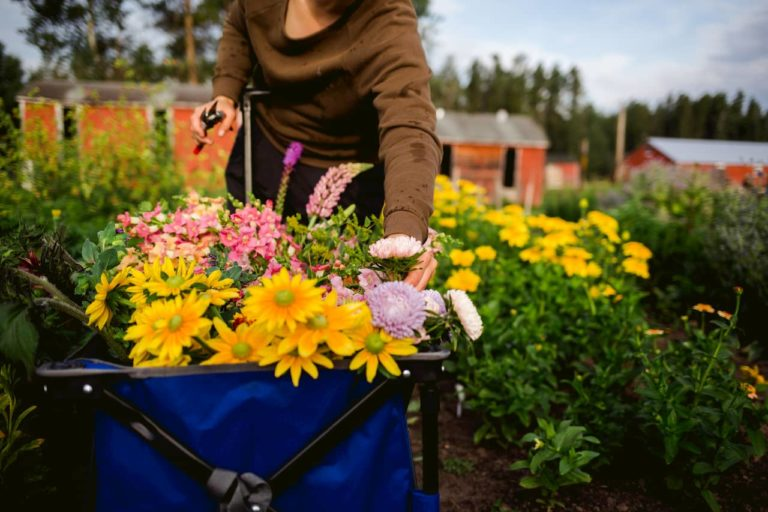 Wagon full of fresh flowers