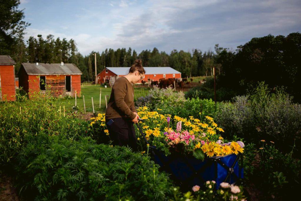 Pulling fresh flowers in a wagon